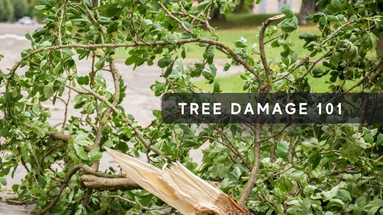NH Tree Damage 101
