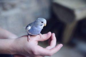 bird prescription medication
