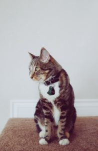 giving topical meds to cats