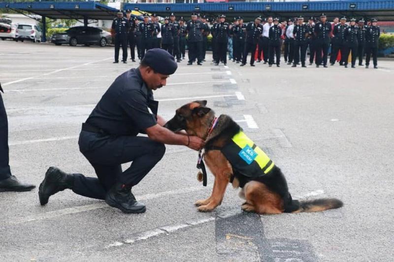 Anjing Hero Malaysia