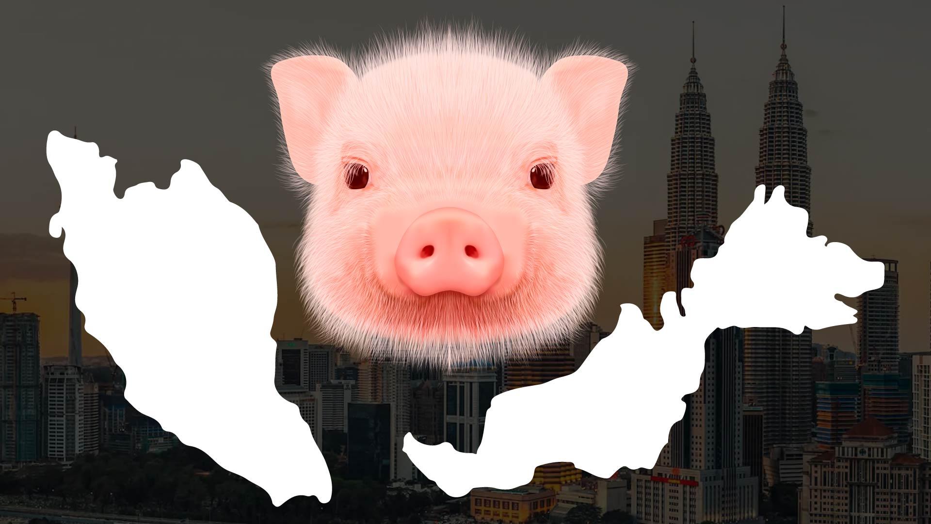 11 Jenis Babi yang Wujud di Malaysia