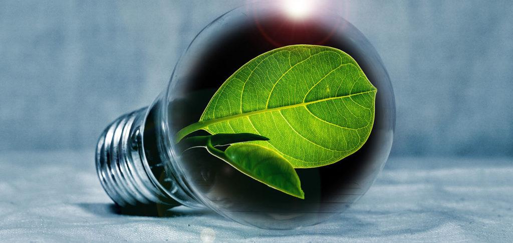 Electricity Procurement photo of a leaf and a lightbulb