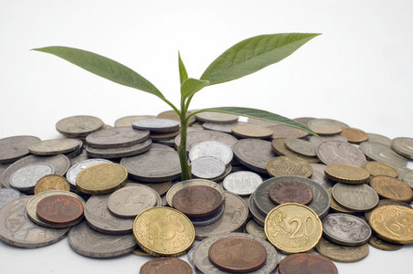 tree sapling sprouting in pile of coins