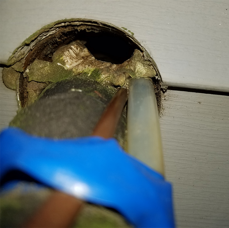 Pipes entering the house. It was foamed but a mouse has chewed through leaving black staining.
