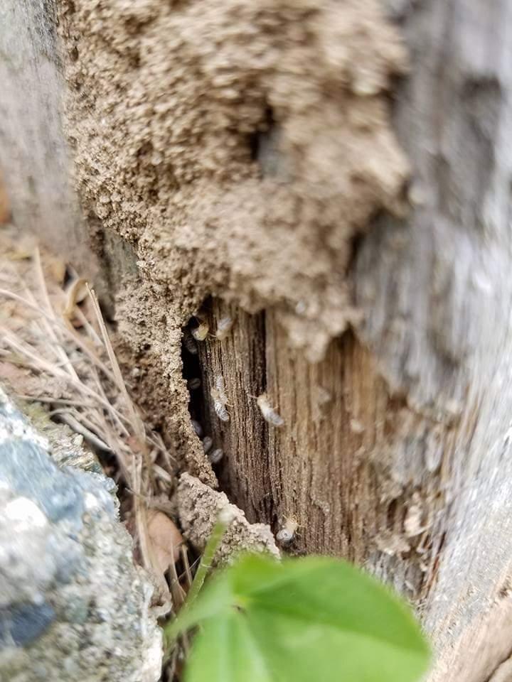 Pest Control for termites