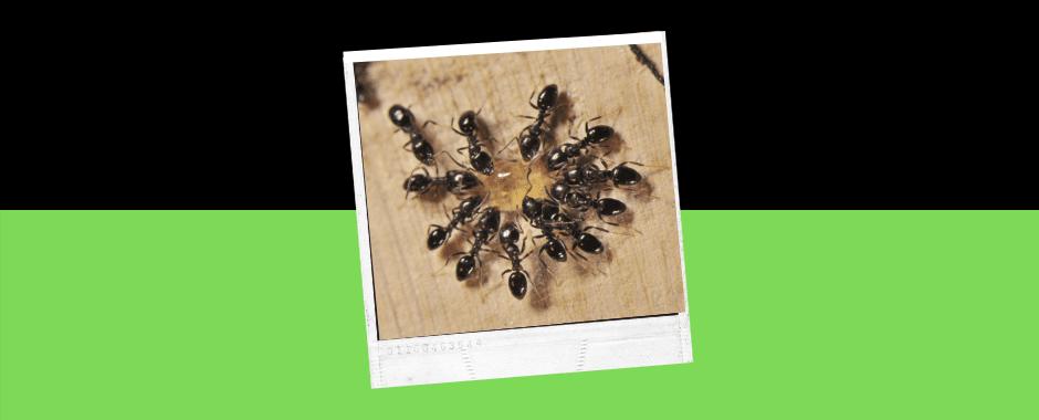 pest control Taree / pest control Foster / pest control Port Macquire