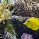 Ozotech Aquarium Application