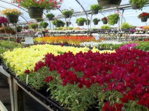 Ridgetop Greenhouses