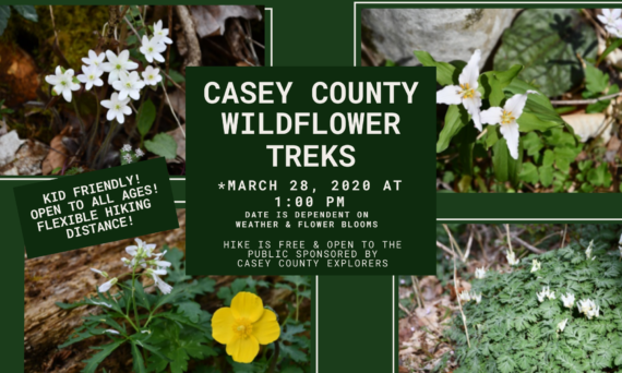 Casey County Wildflower Treks