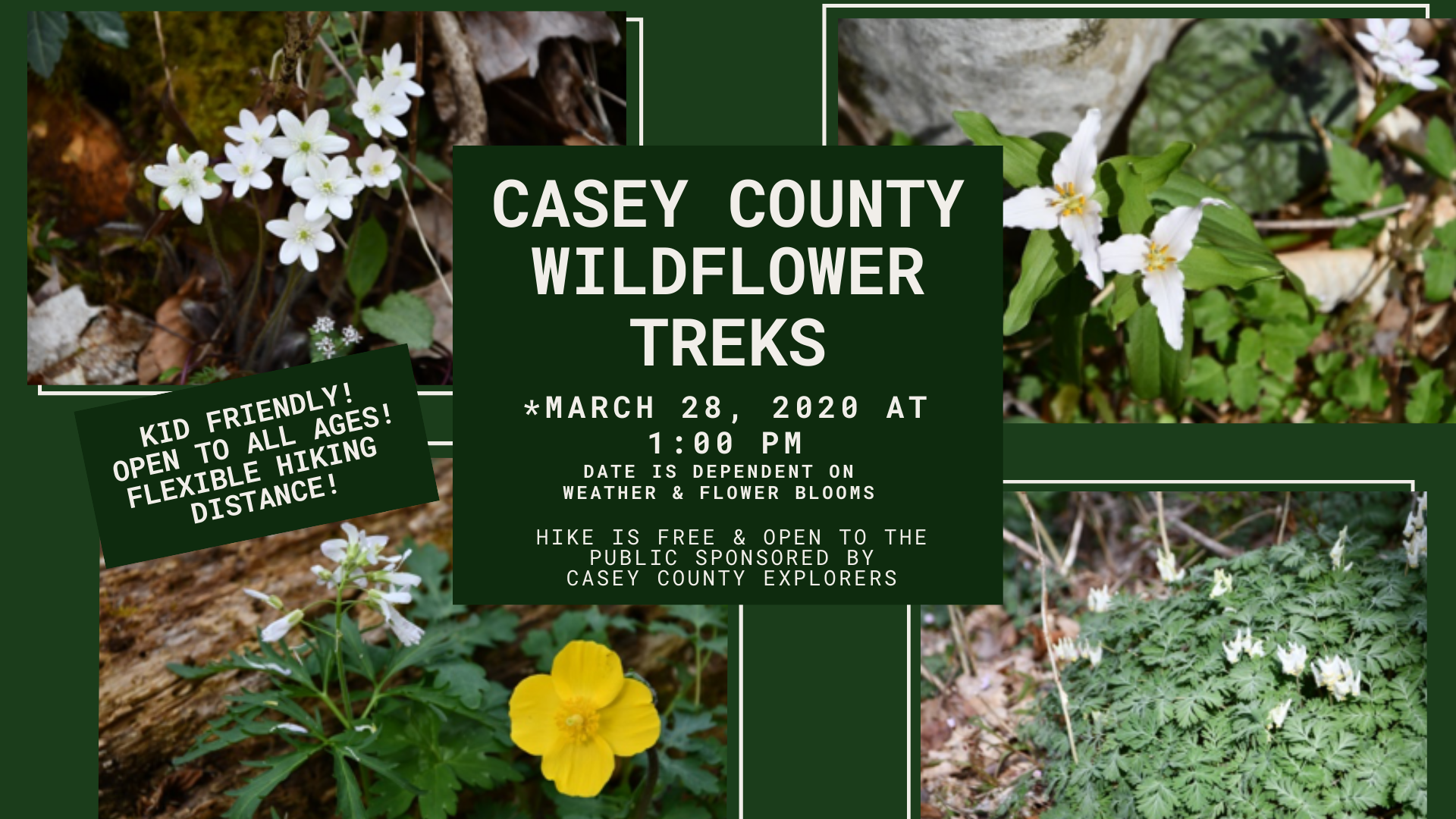 Casey County Wildflower Treks