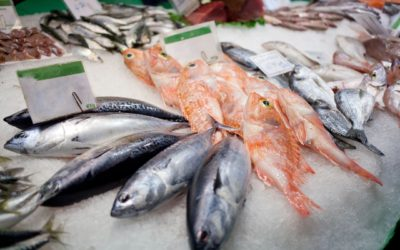 Farmed, Organic, or Wild: The Big Fish Debate