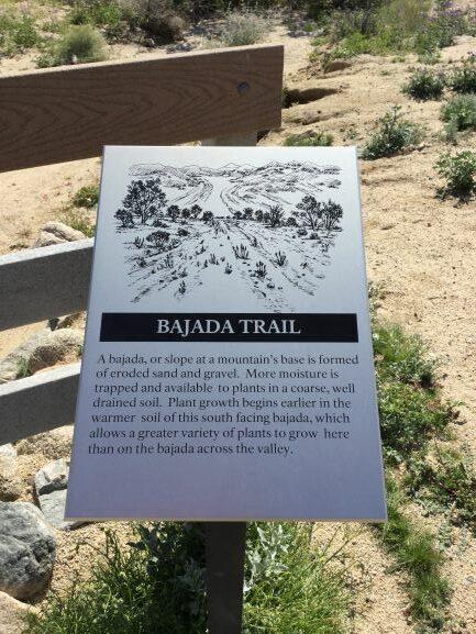 Joshua-Tree-National-Park-Bajada-Trail