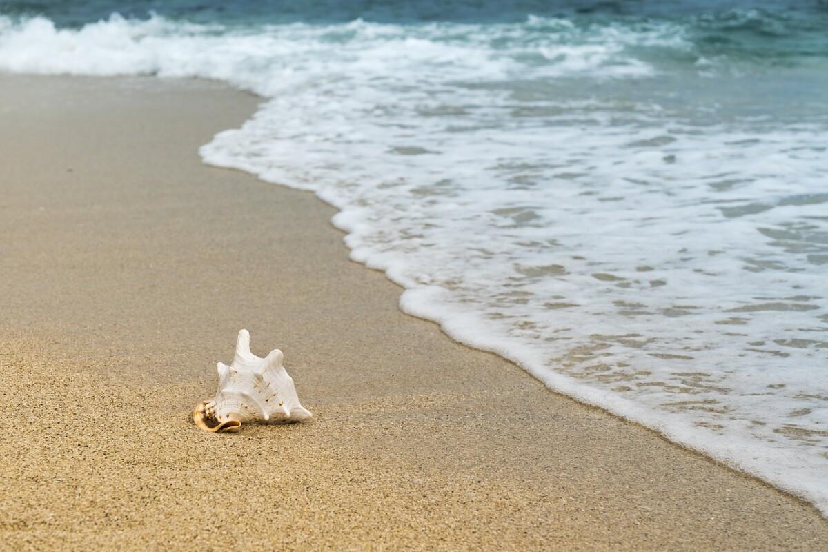 shellfish-3062011_1280