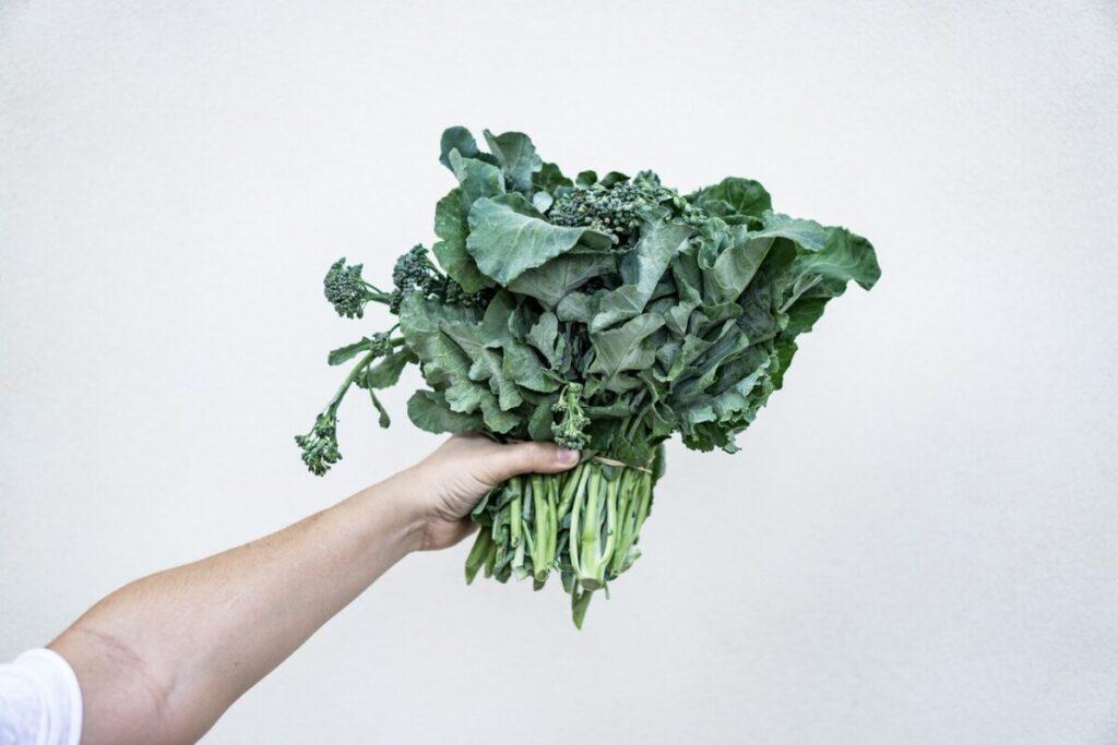 kale green-leafed-plant