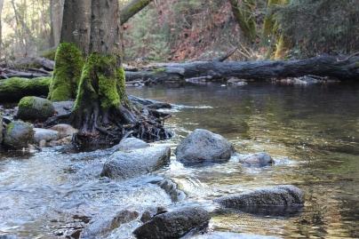 Ashland Fairy Pond hiking Trails