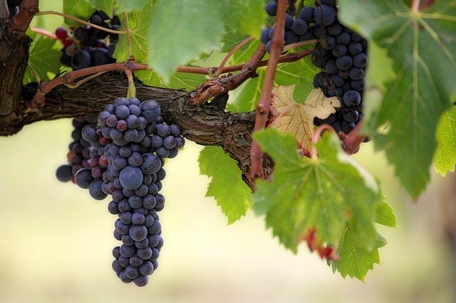 Things To Do In Ashland Oregon - Winery