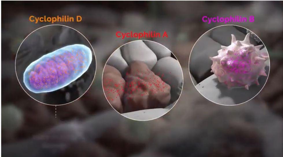 Cyclophilin, Biotech Stock Review