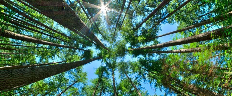 sierra-consultants-blog-environmental-experts