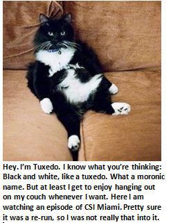 Cat - Tuxedo the cat