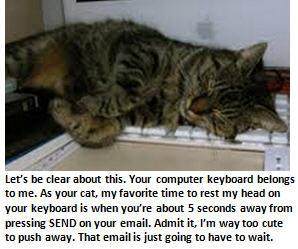 Cat - cat on keyboard