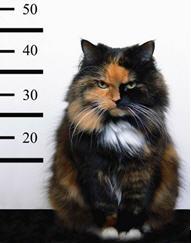 Catmatch - Gizmo