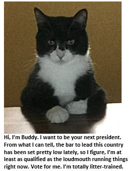 My Cat Buddy Announces His Bid for the Presidency in 2020