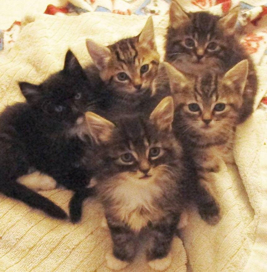 "My wife and I foster kittens several times a year. Here are some of our recent guests. I know, they all look so adorable. Don't be fooled. They're non-stop eating, pooping machines that will turn your house into utter chaos, or as my wife calls it, ""happy pandemonium."""