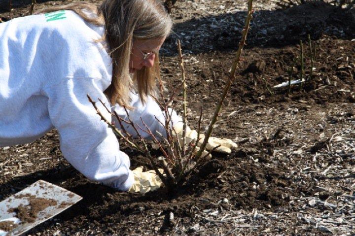 Planting Day 2011 – 5