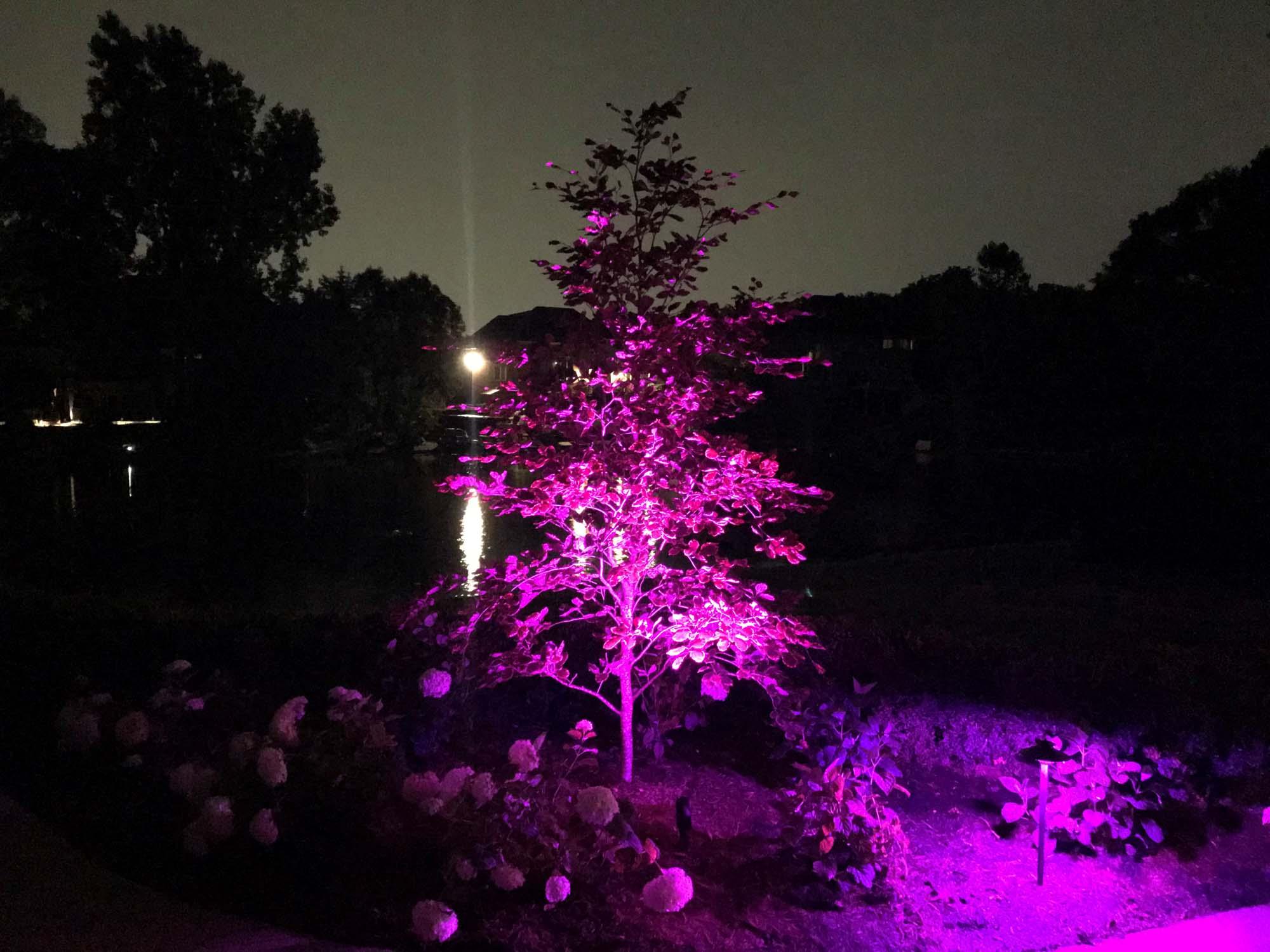 maddox color lighting pic 4