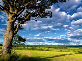 Photo of a summer tree against a beautiful cloudy and blue sky