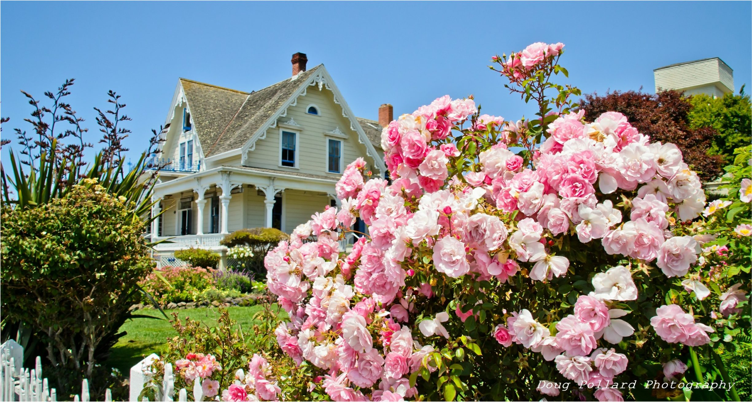Pink roses in the front yard of the MacCallum House Inn, Mendocino, California.