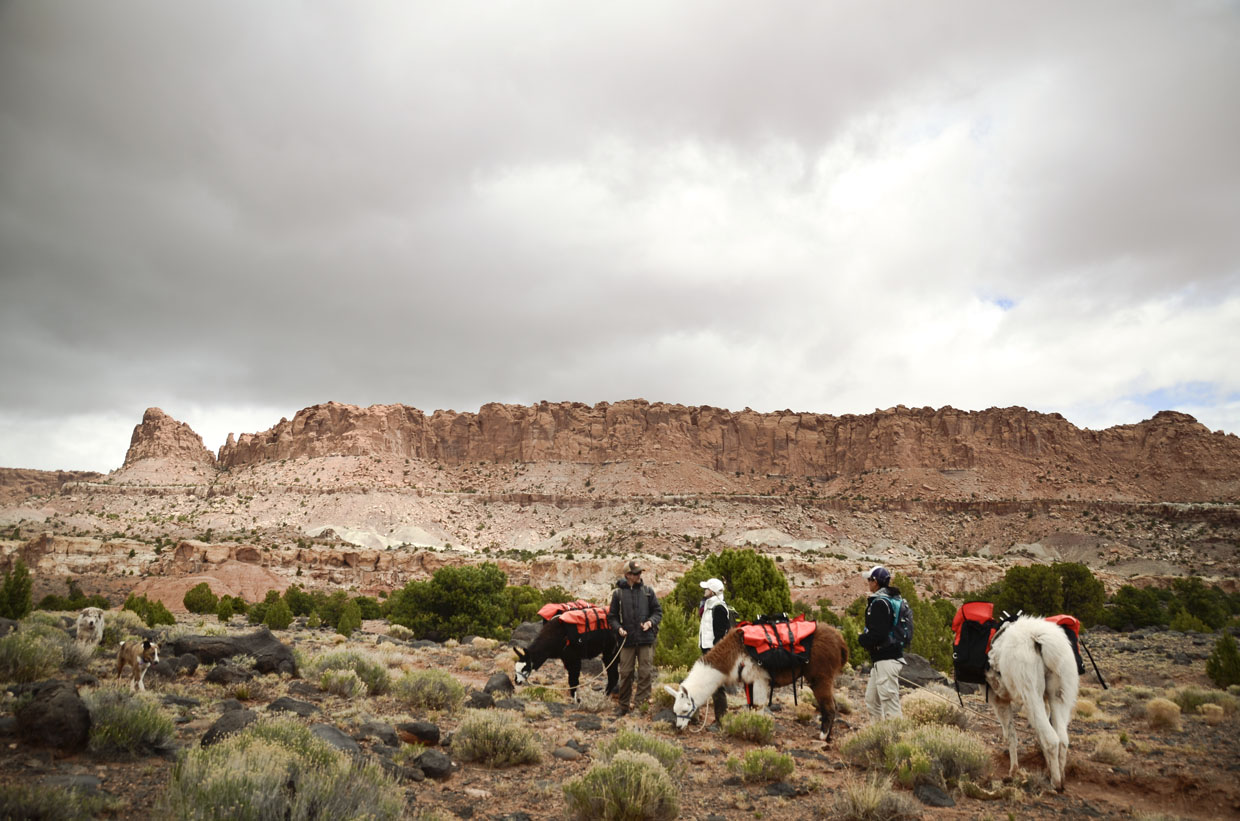 Wilderness-ridge-trail-llamas-sightseeing1-capital-reef-national-park-utah