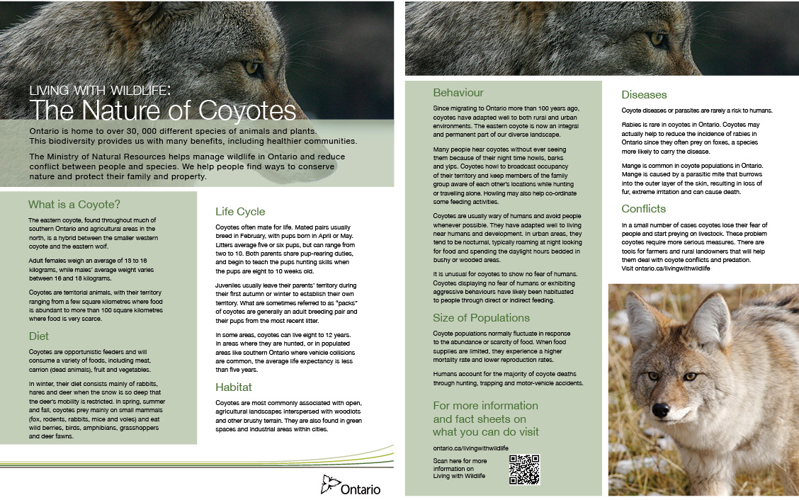 Living With Wildlife: The Nature of Coyotes —Government of Ontario