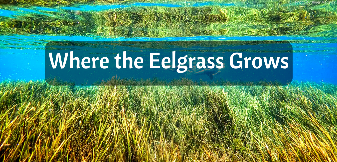 Where the Eelgrass Grows