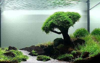 Ejemplo de acuario japonés, con plantas acuáticas para acuario