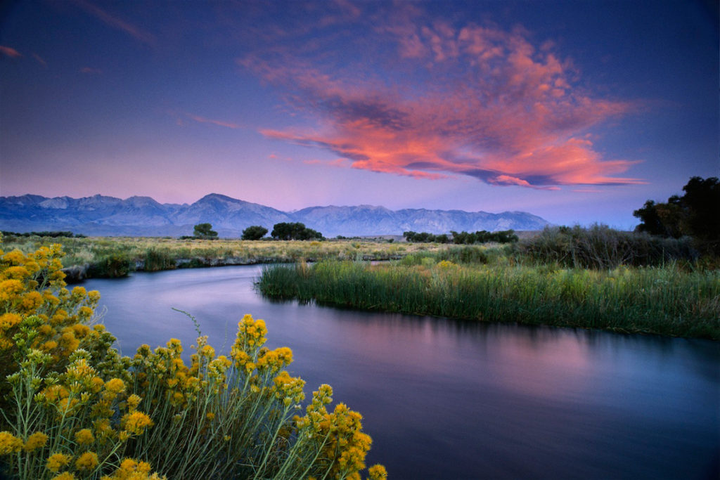 First light on a cloud over the Owens River near Bishop, Eastern Sierra, California. The plant in foreground is rabbitbrush.