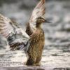 WIIFC 2017 Commemorative Photo Book - Bird Photo Example