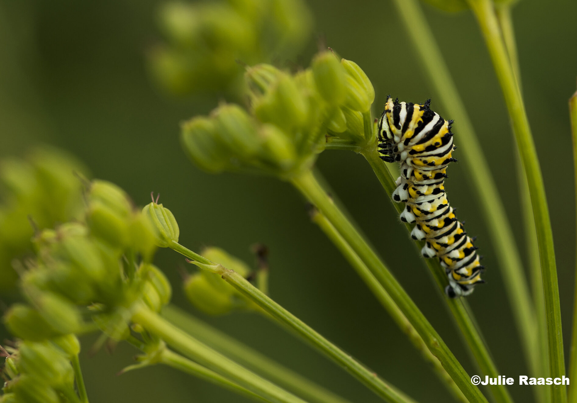 A caterpillar climbing the stalk of a plant