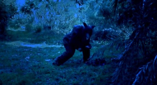predatory moon wolf