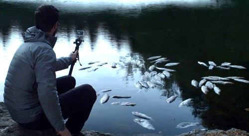 man vs dead fish