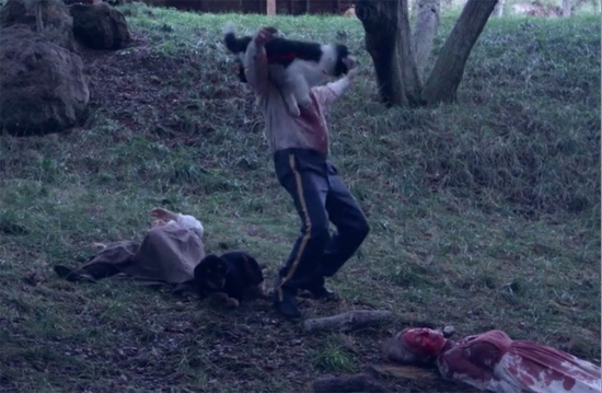 helen keller vs nightwolves wolf attack