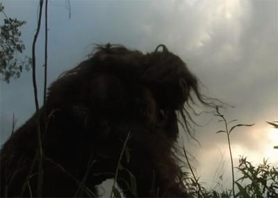 bigfoot holler bigfoot