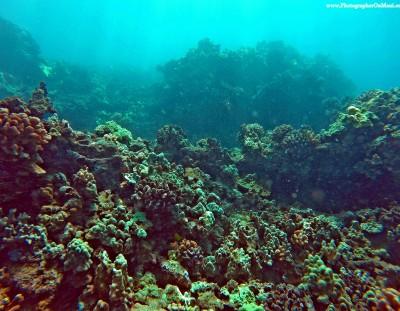 Maui Scuba Diving Video