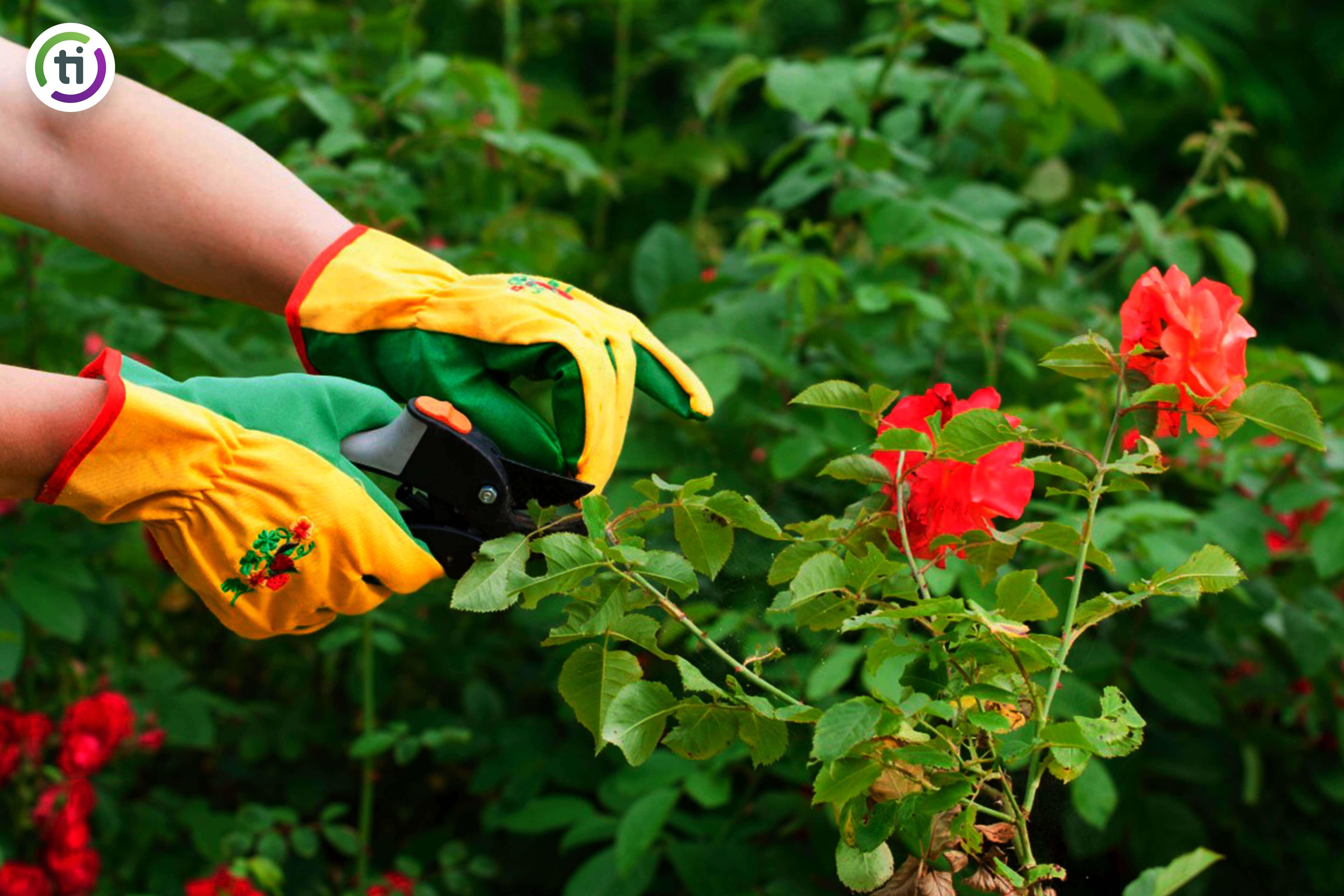 claves para cuidar un jardín