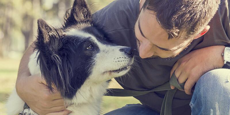 Salud y saber si el perro tiene dolor de estómago