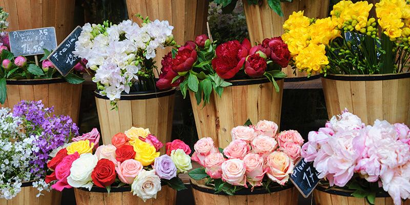 Flores de muchos colores