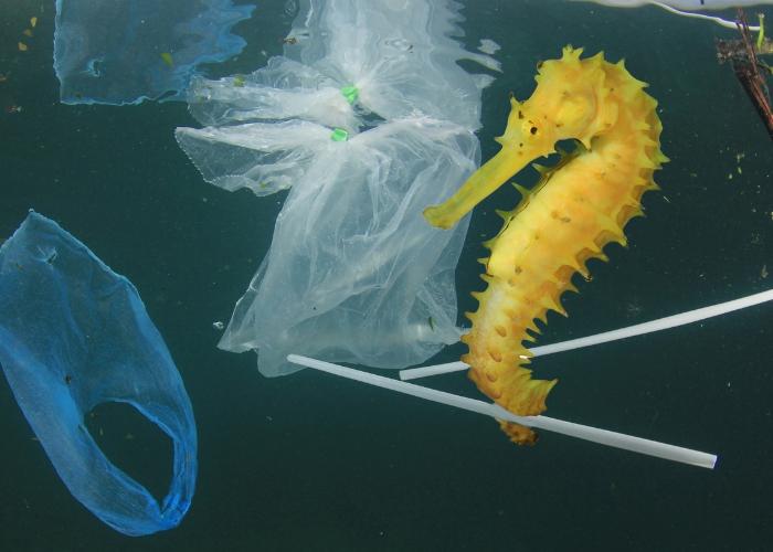 caballito de mar nadando entre basura
