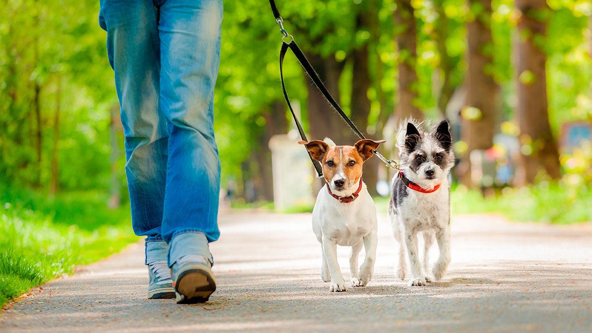¿Cuánto cobrar por pasear perros?