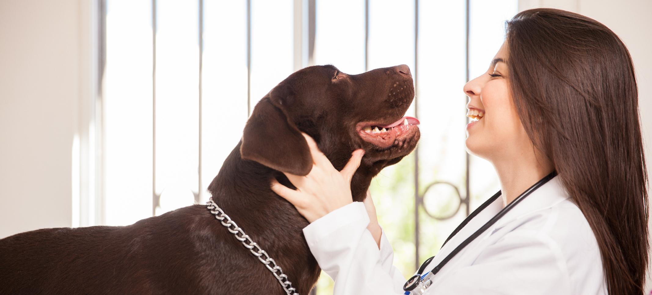 veterinaria y perro