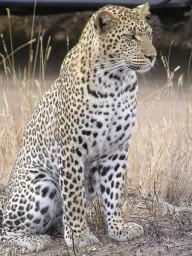 Sustainable Shale - Heinz Leopard